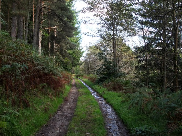 Duchess's Drive, Bowhill Estate