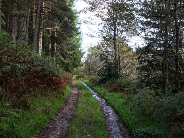 Duchess's Drive, Bowhill Estate