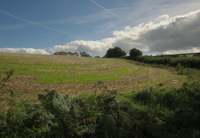 Arable field near Gitcombe