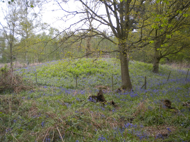 Mound in Colyfield wood