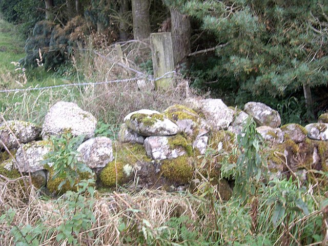 A moss covered dry stone wall