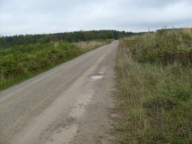 Forest track, Dalby Forest
