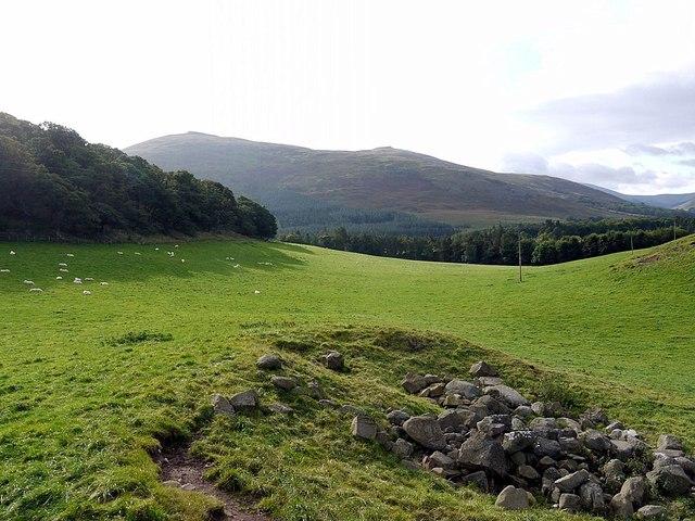 Pasture west of Hethpoolbell Wood