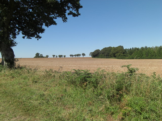 Arable land south of Stubb's Copse