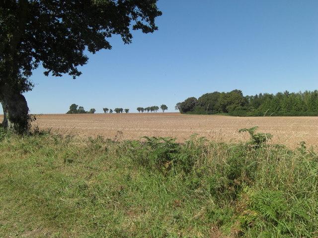 Arable land south of Stubb's Copse