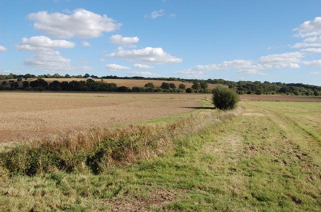Farmland with overgrown drain