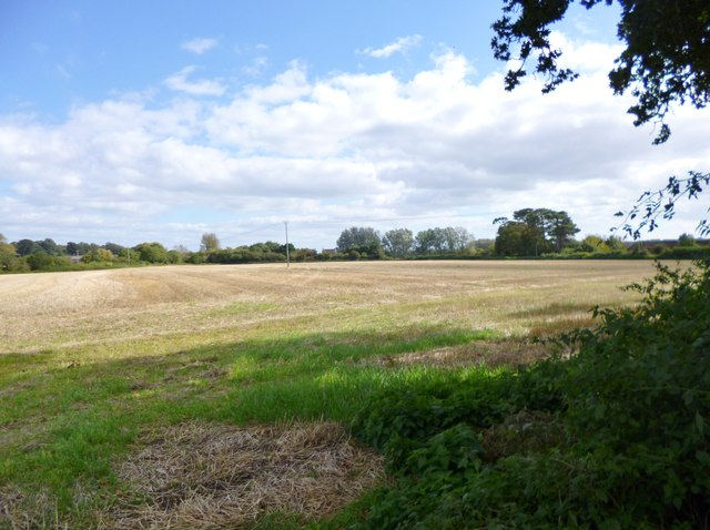 Cowgrove, stubble field