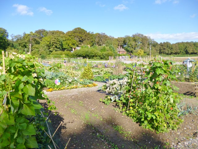 Kingston Lacy, allotments