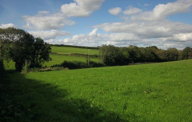 Grass fields at Blackdown Farm