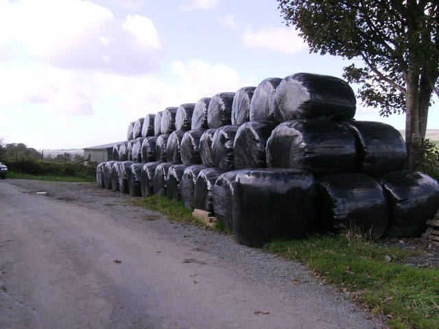 Silage bales at Pistyll Teg