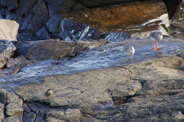 Three birds on a rock at Hellia, Seafield, Lerwick