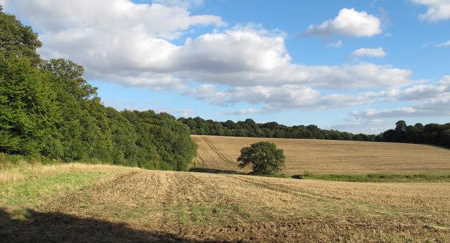 Farmland adjoining Gernon Bushes