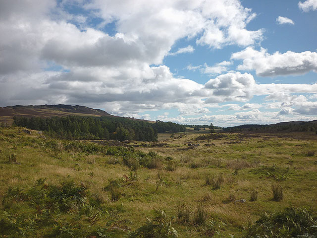 Rough grassland east of Loch Ordie