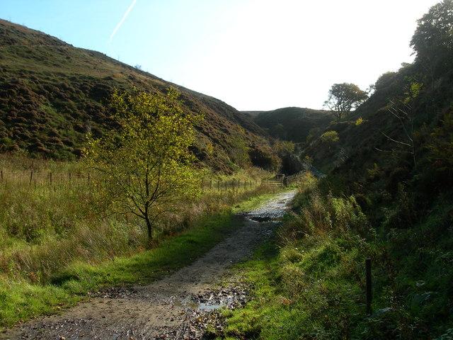 Stepback Plantation - Darwen Moor