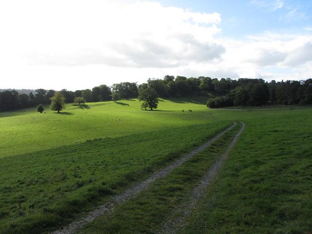 Track across Dinefwr Park