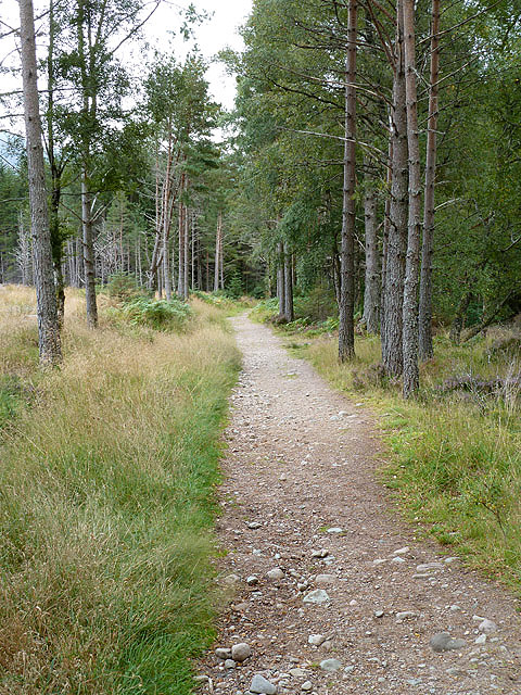 A path in Glenmore Forest Park
