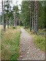 NH9810 : A path in Glenmore Forest Park by Walter Baxter