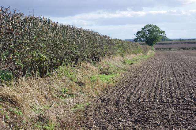 Hedgerow near Burnham