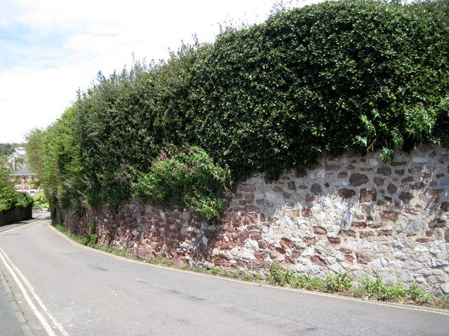 Garden wall and privet hedge by Lower Brimley