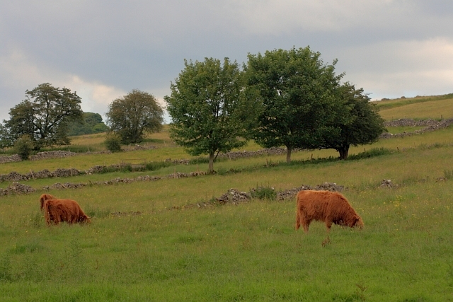 Cow Pasture near Ible
