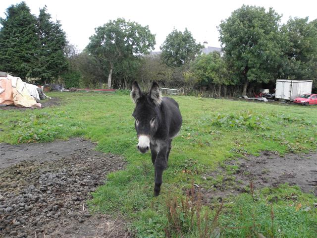 Donkey, Letfern