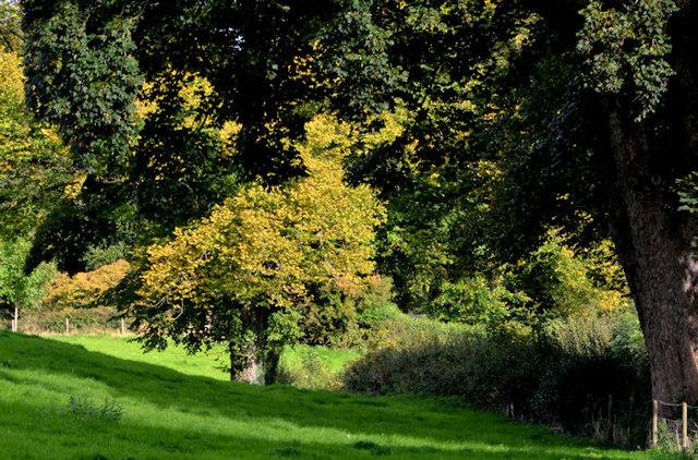Signs of autumn, Minnowburn, Belfast