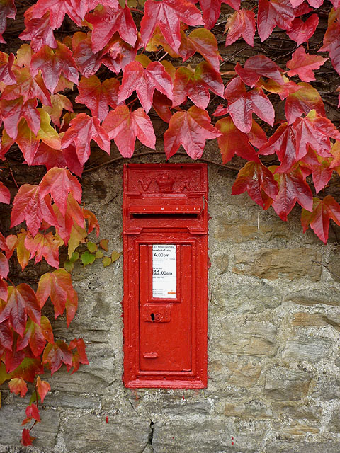 Victorian postbox and Virginia creeper, Thwaite