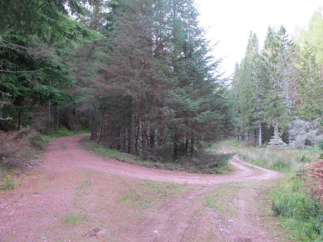 Tracks Near Romach Loch