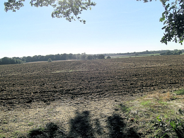 Newly cultivated farmland north of Lower College Copse