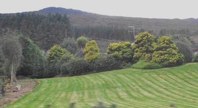Hill slope forests above R173 between Carlingford and Omeath