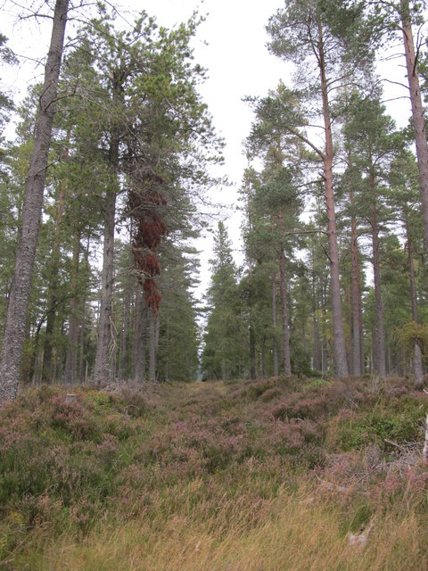 Firebreak in Newtyle Forest
