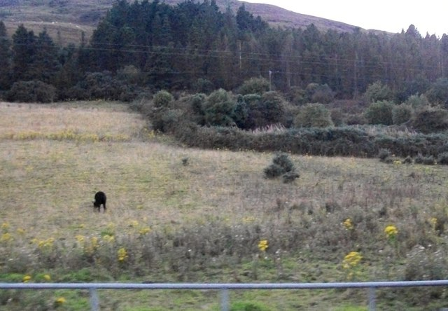 Rough grazing and forest above the R173 coastal road