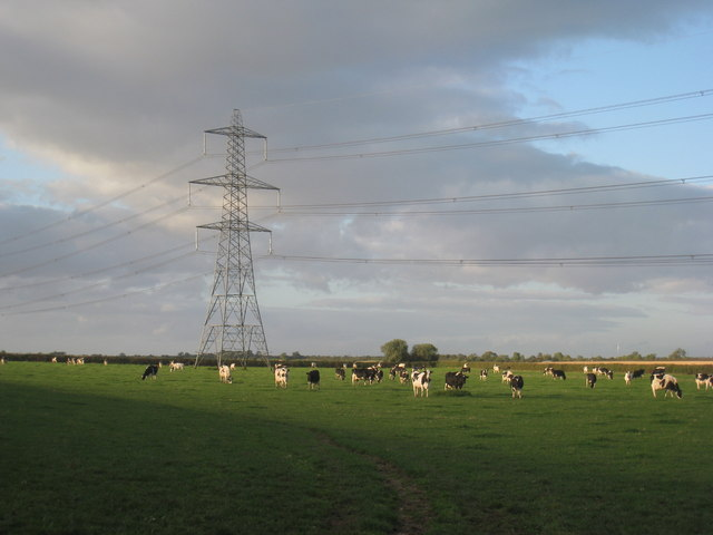 Dairy cattle and an electricity pylon