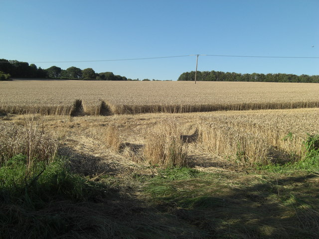 Standing arable crop in farmland