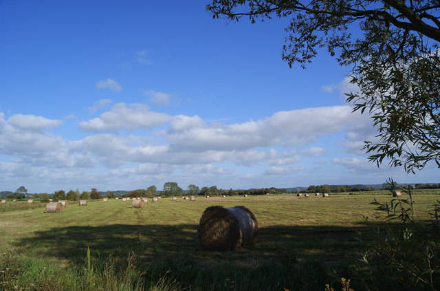 Hay bales on Sedgemoor