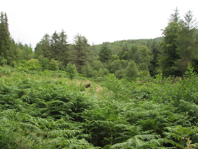 Forest clearing, Ards Forest Park