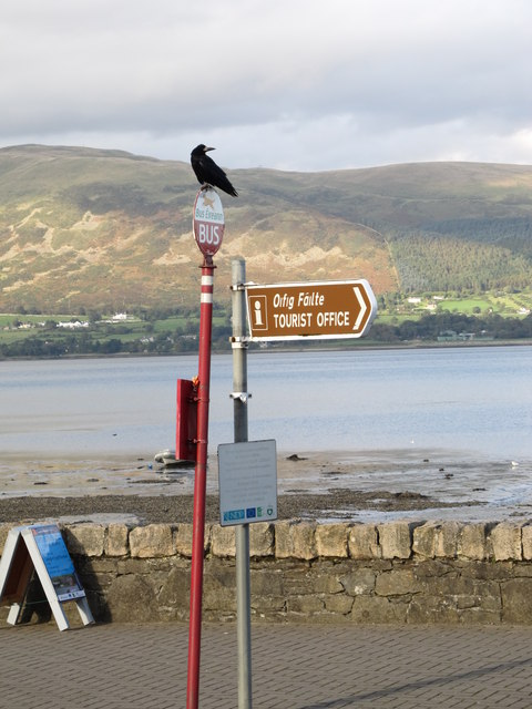 A rook on the Bus Eireann Bus Stop at Carlingford
