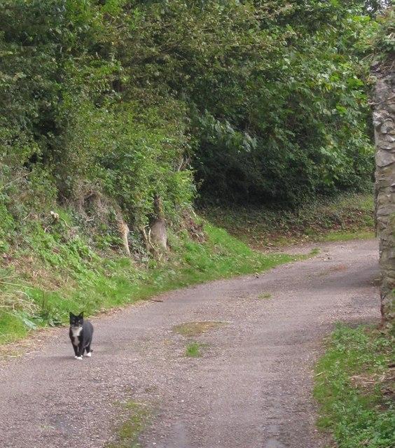 Cat, Stantaway Hill