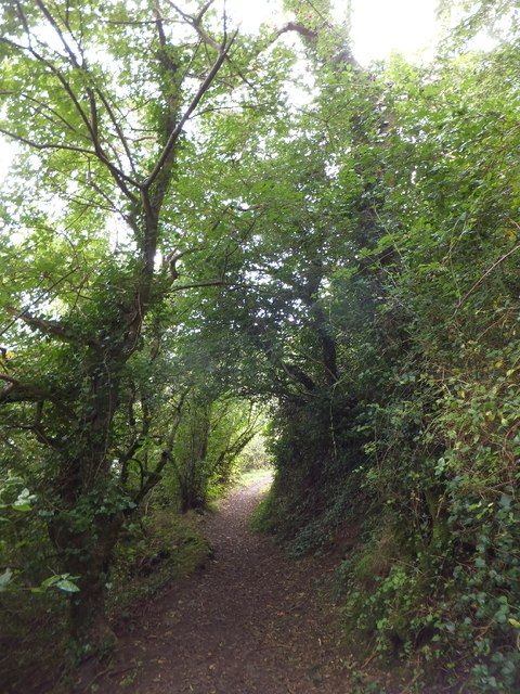 Coast path in the woods of Black Head (1)