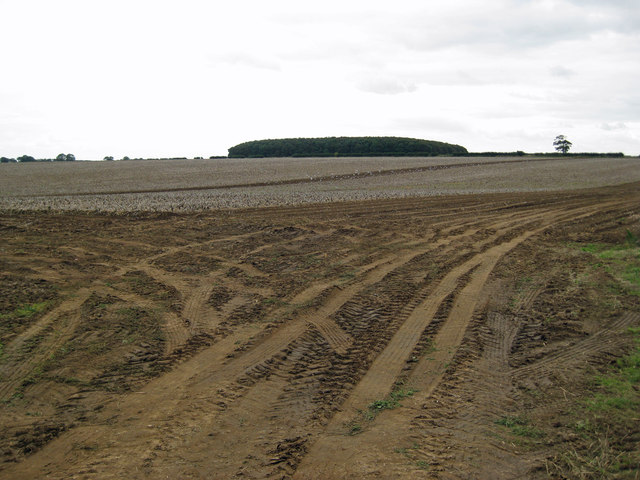 Looking towards Fox Covert Plantation