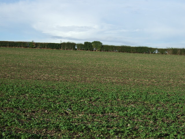 Farmland, Bessingby Hill