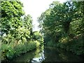 SO8278 : Tree-lined Staffs and Worcs canal by Christine Johnstone