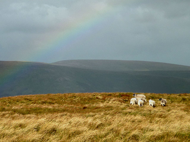 Sheep and rainbow, Point 673m