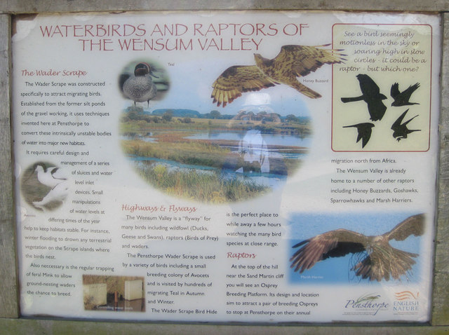 Information about Wader Scrape