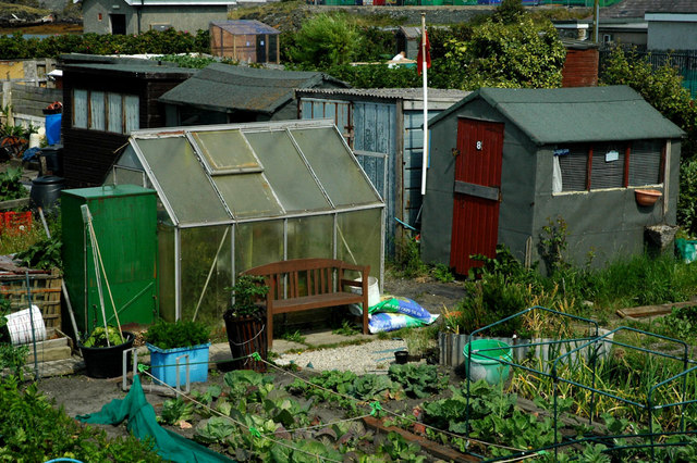 Allotments on Prince of Wales Road