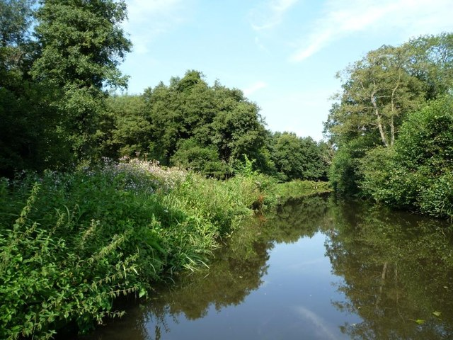 Lush towpath vegetation on the Staffs and Worcs