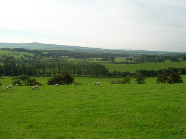 Sheep grazing in a Lancashire field