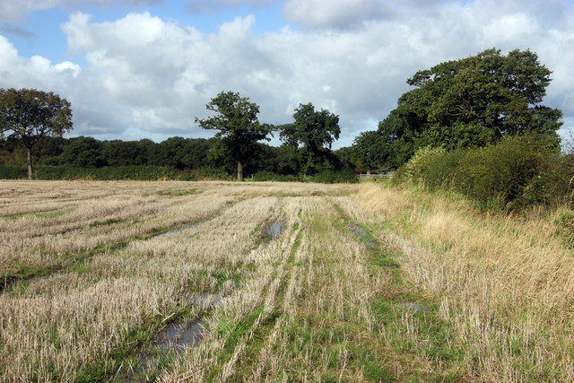 The path to Springwood Farm