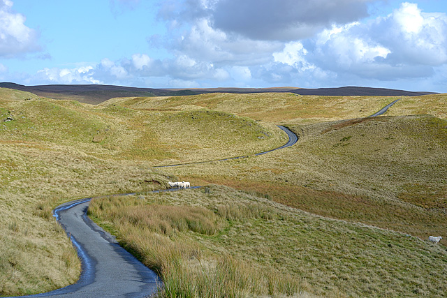 The road past Teifi Pools