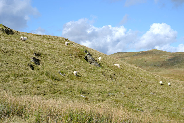 Sheep on Craig Ddu Fach